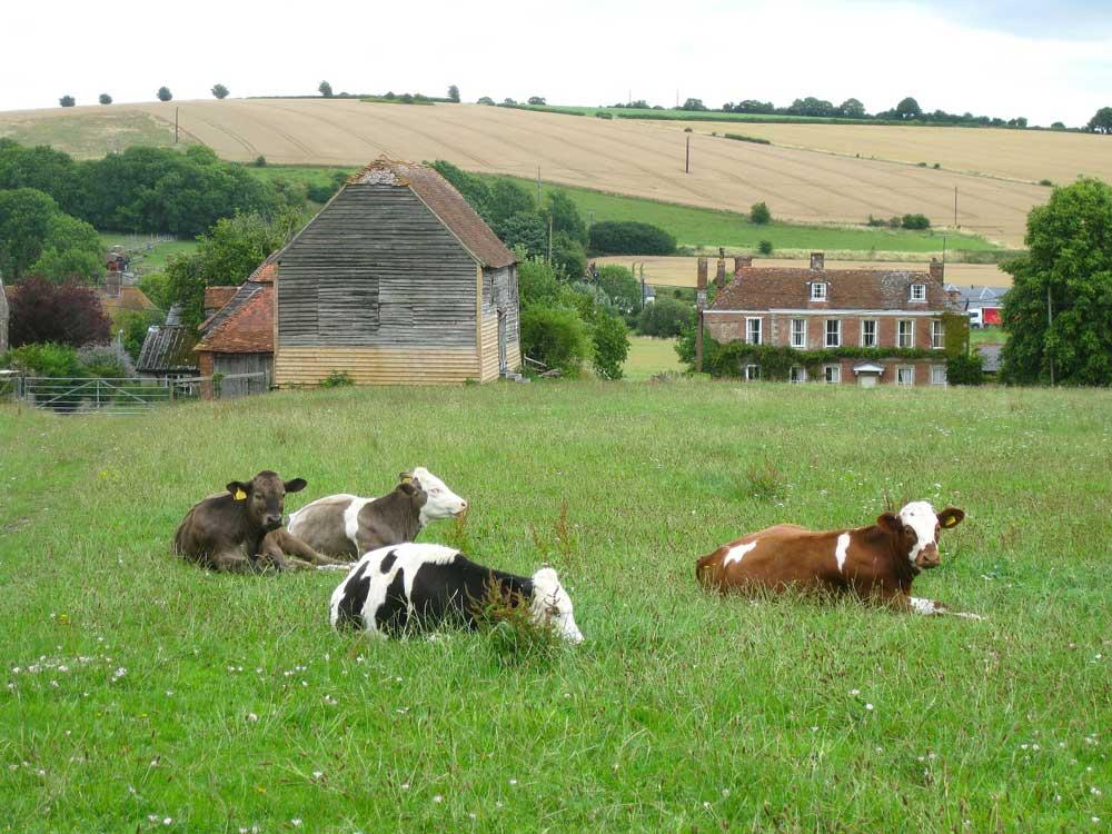 granja con vacas